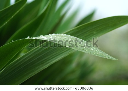 Water drops on green leaves - stock photo