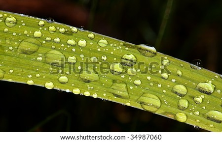 Water drops on green leaves after a rain