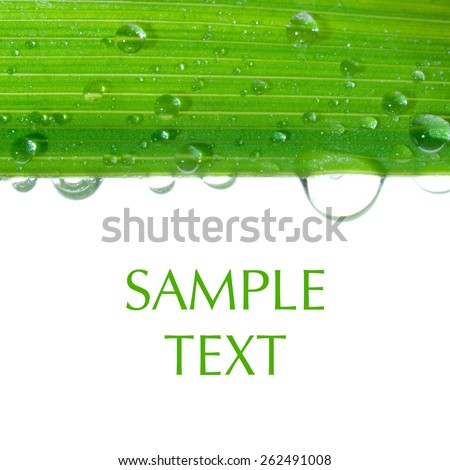 Water drops on green stalk isolated on white with space for text. - stock photo