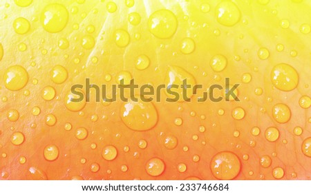Water drops on leaf in pastel styles. - stock photo