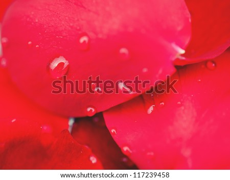 water drops on red rose petals - stock photo