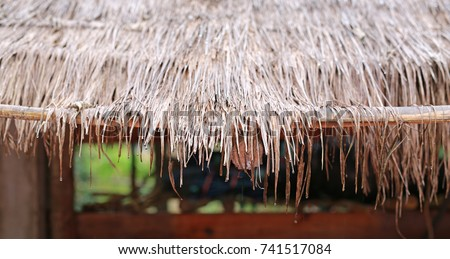 Water Drops On Thatched Roof. Roof Made Of Dried Leaves Of The Cogon Grass  In