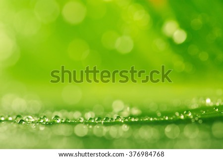 Water drops on the fresh green grass as a background, macro shot - stock photo
