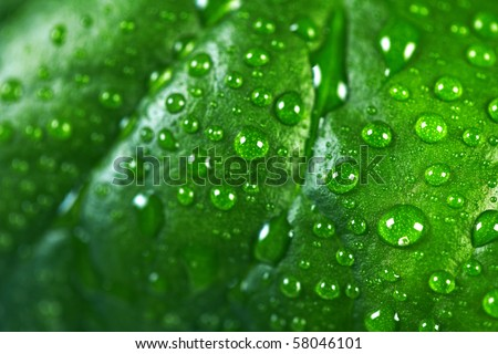 Water drops on the fresh leaf. Macro - stock photo