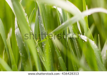 Water drops on the green grass. Nature background.