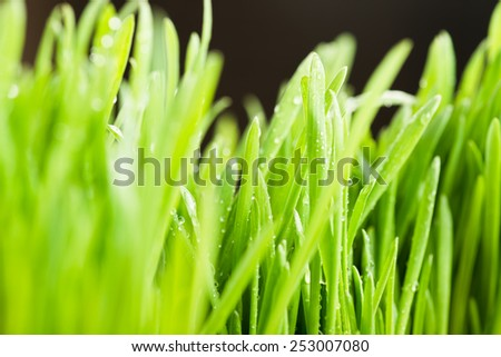 Water drops on the green grass (Shallow Dof)  - stock photo