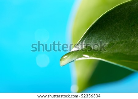 water drops on the green leaf - stock photo