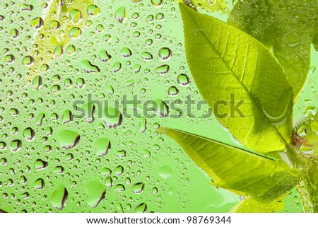Water drops on the window after rain with leaves - stock photo