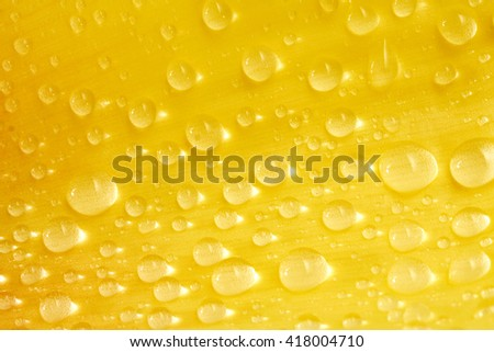Water drops on yellow flower petal - stock photo