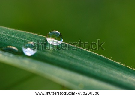 water drops with nature background, dew drops in the morning, fresh green background