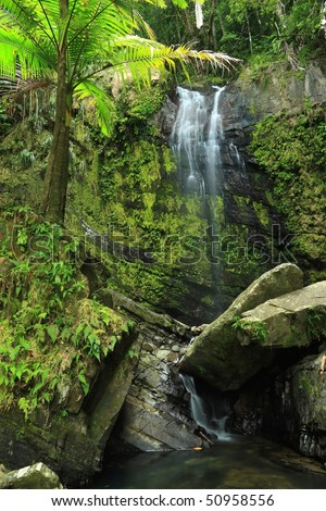 Water falls gently into a rocky pool beneath a palm tree in the El Yunque rainforest in the Caribbean National Forest, Puerto Rico - stock photo