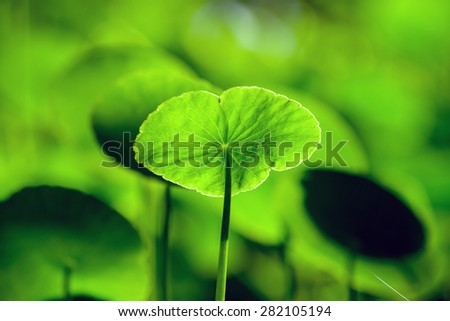 water fern leaf