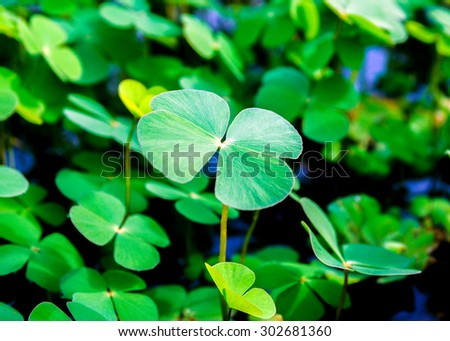 water fern leaf background