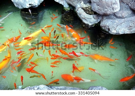 Water garden with rocks and goldfish pond - stock photo
