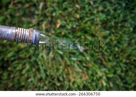 Water hose watering a GREEN California grass during a drought
