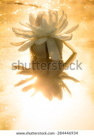 water lily blooming with golden sunlight - stock photo