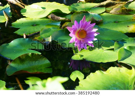 Water lily in a pond, cross-processed. - stock photo