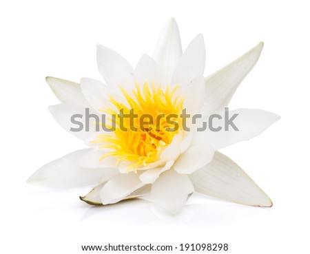 Water lily. Isolated on white background - stock photo