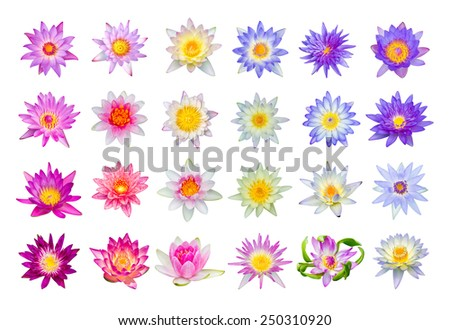 Water lily or lotus flower set 24-1 isolated on white - stock photo