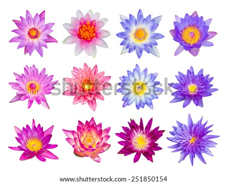 Water lily or lotus flower set 12-1 isolated on white - stock photo