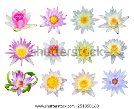Water lily or lotus flower set 12-2 isolated on white - stock photo