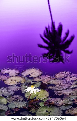 Water lily pond at late sunset silhouette Tobago Caribbean - stock photo