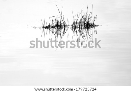 Water mirror and reed with reflection in black and white - stock photo