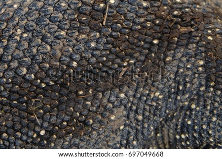 Water monitor's skins.It is reptile in South Asia and Southeast Asia.
