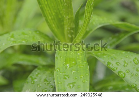 Water of green nature - stock photo