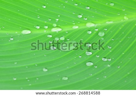 Water on leaf - stock photo