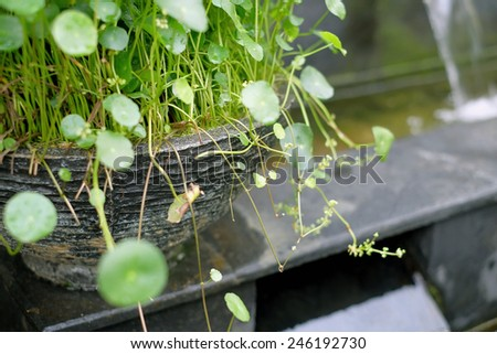 Water plants - stock photo