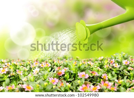 Water pouring watering can onto blooming flower