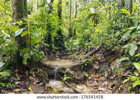 Water running off the rainforest floor after heavy rain in the Ecuadorian Amazon. - stock photo