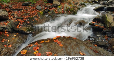 Water rushing over the rocks past fallen leaves.