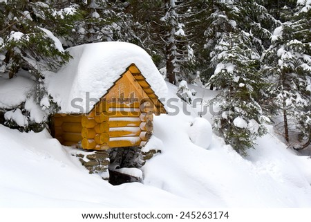 Water source in winter fir-tree forest  - stock photo