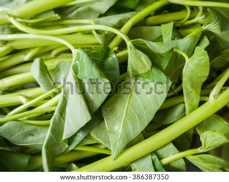 convolvulaceae orange jessamines green leaf small flower stock photo 397232440
