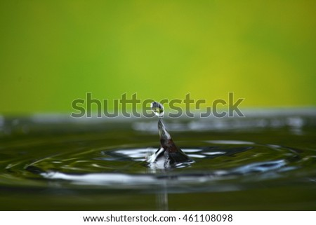 Water splash on the green background