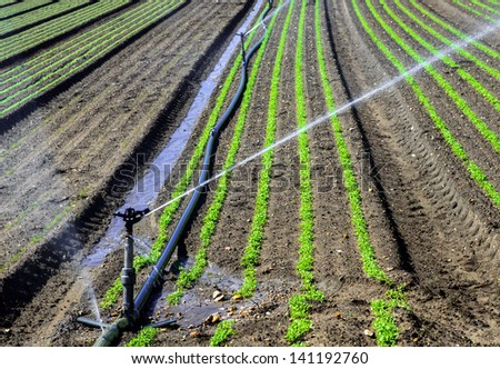 Water sprinkler system working on a nursery plantation - stock photo