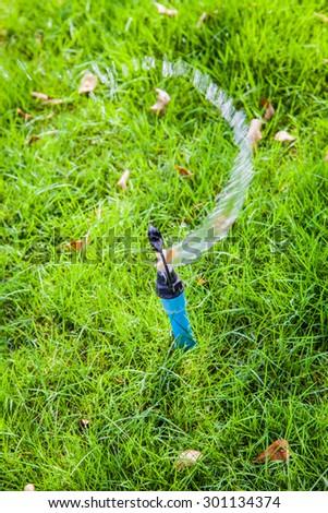 water sprinkler watering green plant. - stock photo