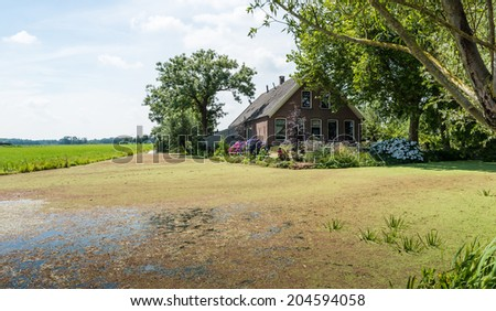Water surface covered with duckweed and an old brick house in the shade of the trees. - stock photo