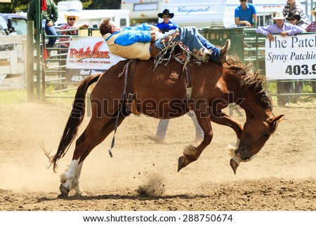 WATER VALLEY, CANADA - JUN 6 2015:Unidentified Cowboy participating in the at the Bareback Bronco Water Valley Rodeo.This annual event is important for the rural as well as the sport loving community. - stock photo