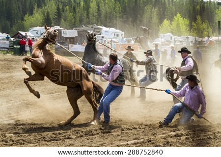WATER VALLEY, CANADA-JUN 6 2015:Unidentified Cowboy participating in the at the Bareback Bronco Water Valley Rodeo. This annual event is important for the rural as well as the sport loving community. - stock photo