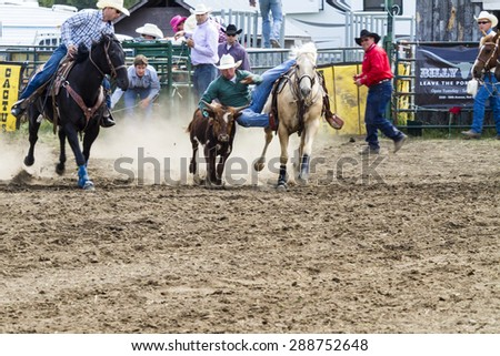 WATER VALLEY, CANADA - JUN 6 2015:Unidentified Cowboy participating in the Calf Roping  at the Water Valley Rodeo. This annual event is important for the rural as well as the sport loving community. - stock photo
