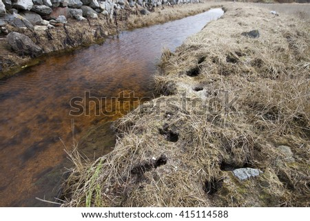 Water vole runway system and holes close to ditch at early spring. Photographed in Helgeland, Norway.  - stock photo