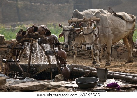 Water wheel powered by cattle - stock photo