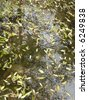 Water with reflection showing plants and leaves - stock photo