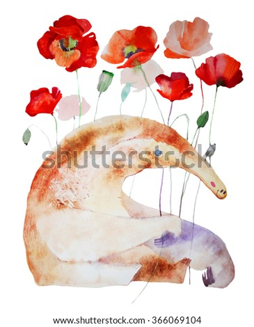 watercolor ant eater and poppy flower, hand painted illustration isolated on white background - stock photo