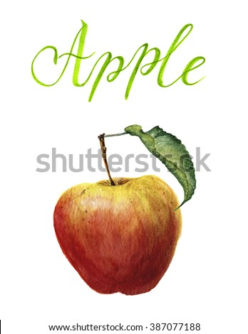 Watercolor apple with leaf and lettering isolated on white background. Botanical illustration - stock photo