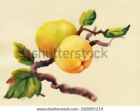 Watercolor apples painting on tree - stock photo