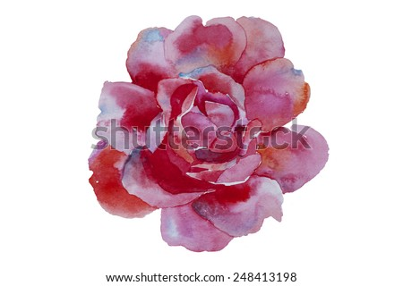 watercolor art pink rose original illustration isolated on white background - stock photo